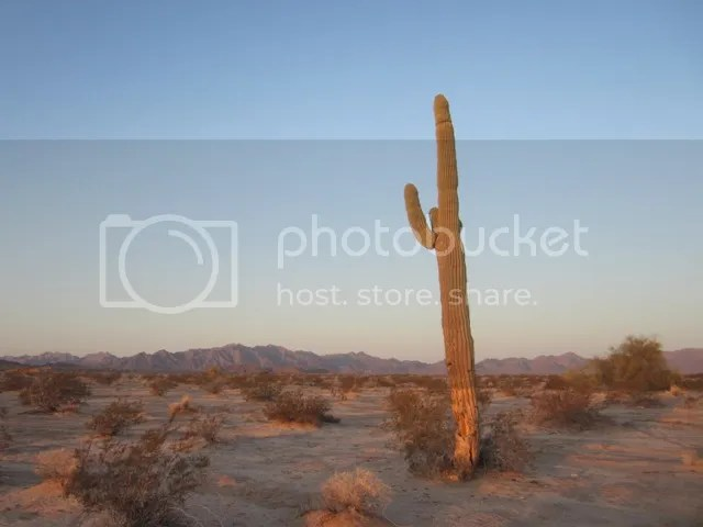 Saguaro cactus photo SonoranApril2013808a_zpsf121912a.jpg
