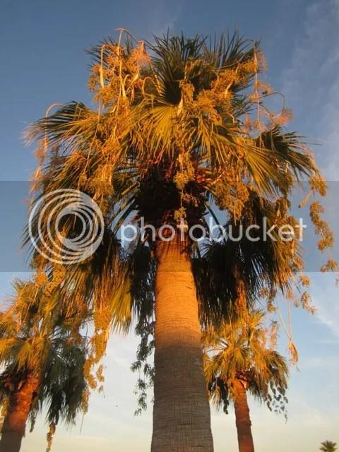 photo SonoranAug2013250a_zps37d64a8b.jpg