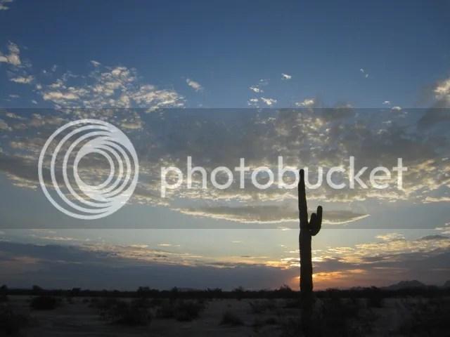 photo SonoranAug2013785a_zps325b655f.jpg