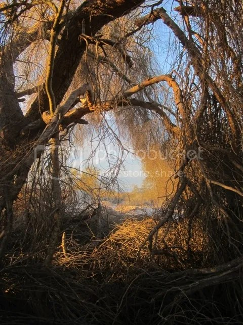 Palo verde tangle photo SonoranFeb2013356b_zps4a61f92d.jpg