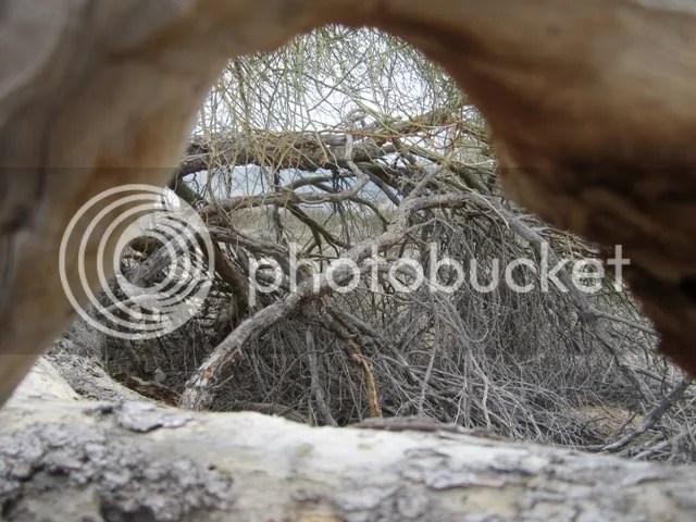 Undergrowth photo SonoranJan20131778a_zpsa8814adc.jpg