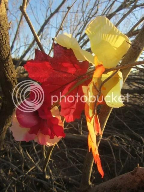 First silk blooms photo SonoranMar20131854a_zps21a43b92.jpg