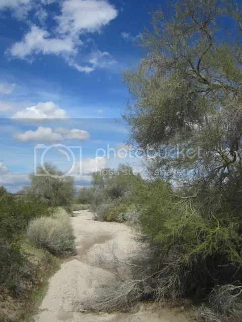 Maricopa County wash photo SonoranMaricopapath_zps5e898e7b.jpg