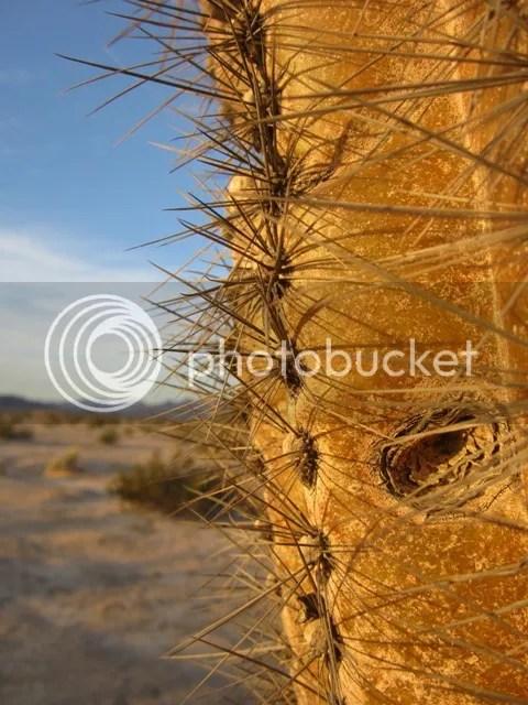 Saguaro cactus photo SonoranOct20121389a_zps4dd0da83.jpg