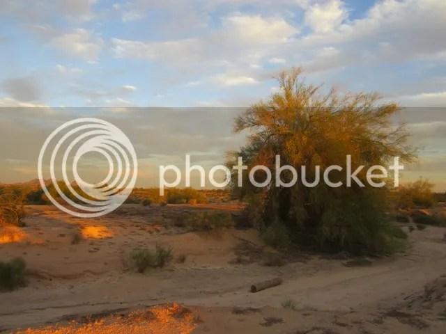 photo SonoranOct2013577a_zps28c03e13.jpg