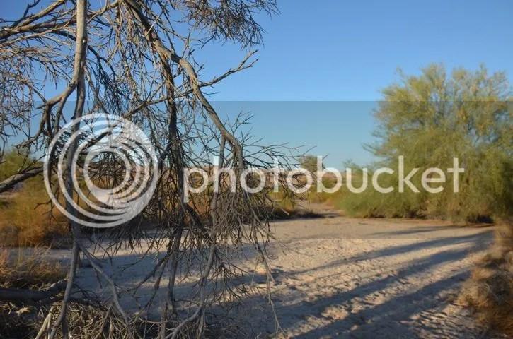 photo Sonoranlongshadows_zpsa7af3a36.jpg
