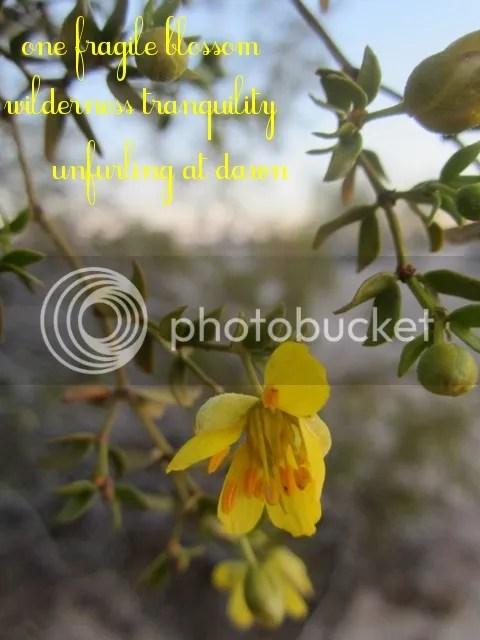 Tranquility haiga photo TranquilityHAIGA_zpsc6929e2a.jpg