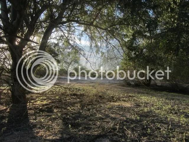 photo desertshade_zpsa7652a00.jpg