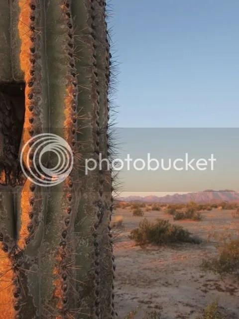 Saguaro at daybreak photo saguarodaybreak_zpsc876edde.jpg