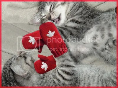 photo kittens-red-mittens_zpseface69e.png
