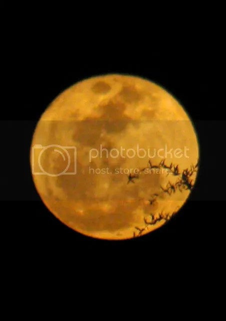 orange red moon rising not my image over trees