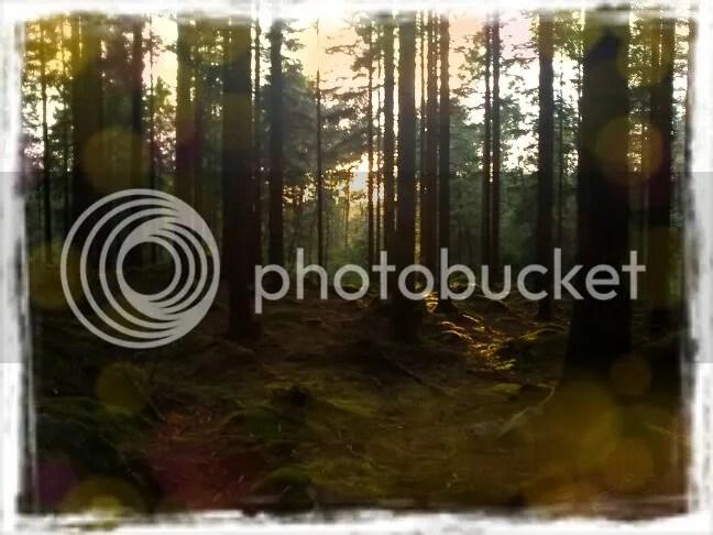 Snapbucket,Effect: Orange Bokeh,Frame: Grunge White