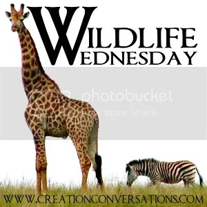 Wildlife Wednesdays