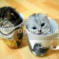 Gatinhos fofos em xícaras