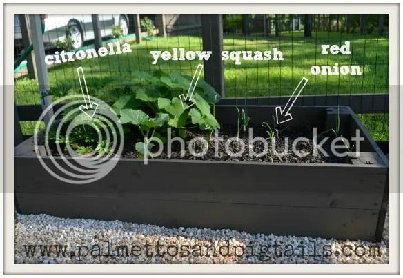 DIY Vegetable Garden by PalmettosandPigtails.com