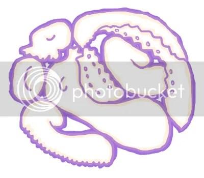 Octopus Salame