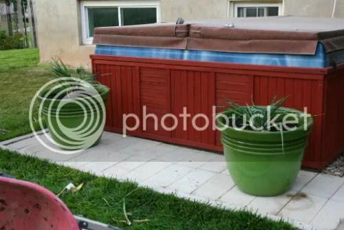 Replanting Yucca plant 6