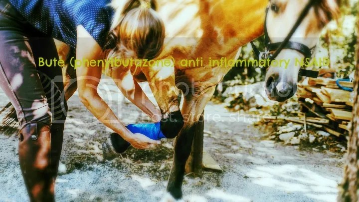 Bute horse medication treats inflammation in horses
