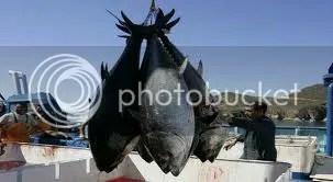 Radioaktív halak Ameriak partjainál