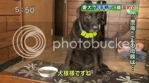 Életmentő kutya Hokkaidóban