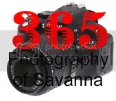365 Photography of Savanna