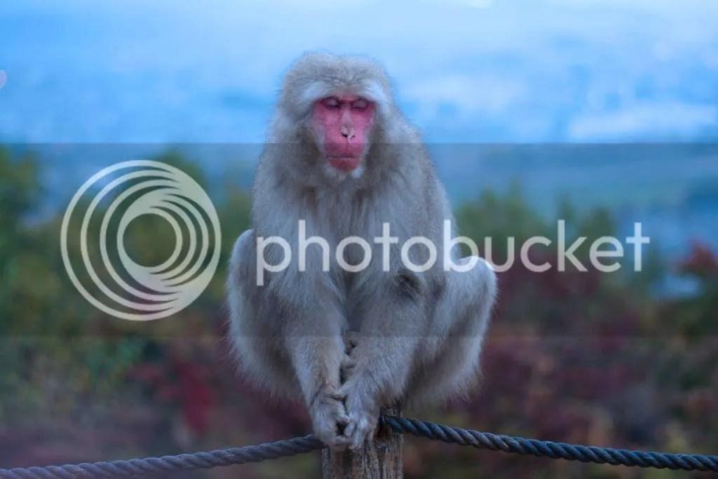photo monkey.jpg