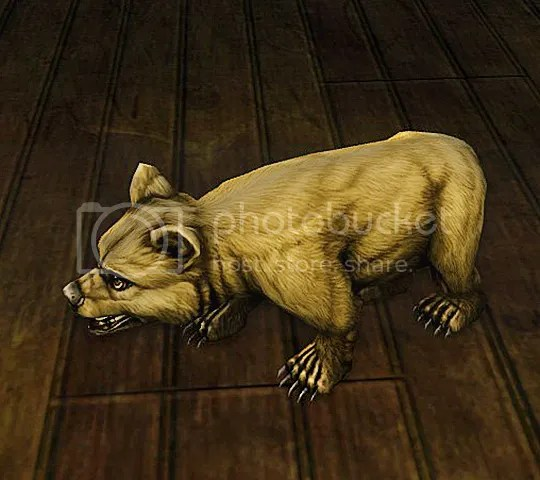Blonde bear cub