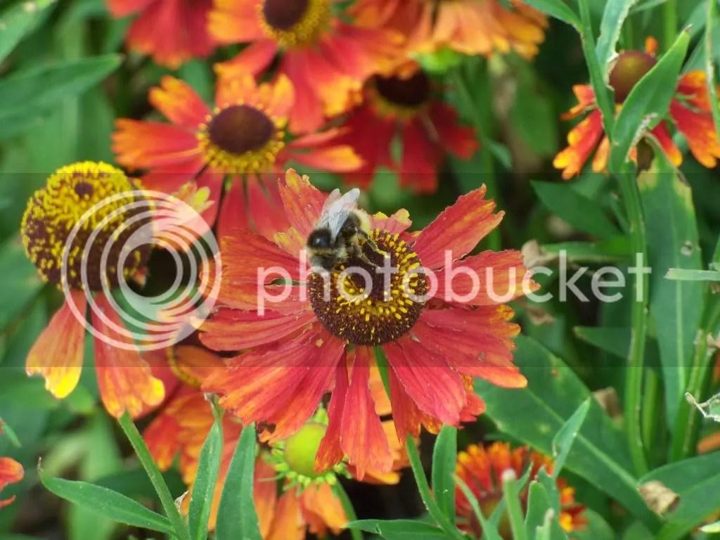 Bee & Flower 2