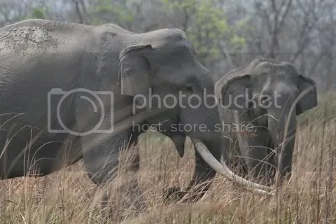 tusker and another  020411