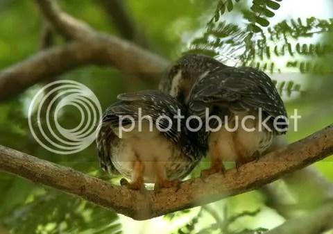 two owlts prng  b 130511
