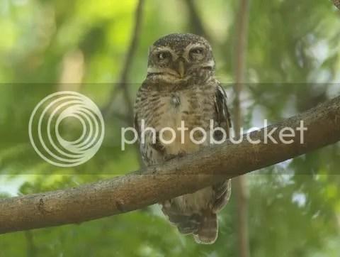 third owlt lb 130511