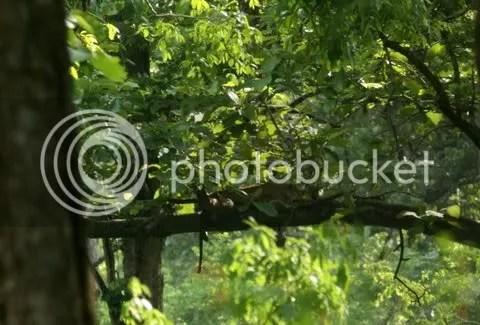 lpd tree 140511
