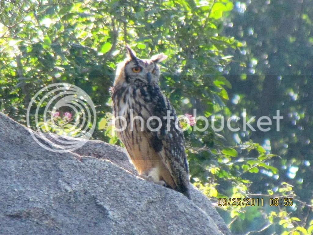 4 e owl trhli 250911