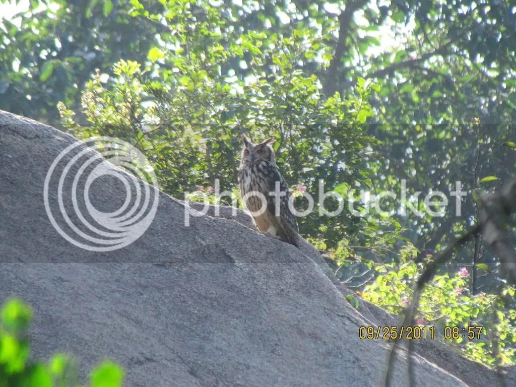 3 e owl trhli 250911