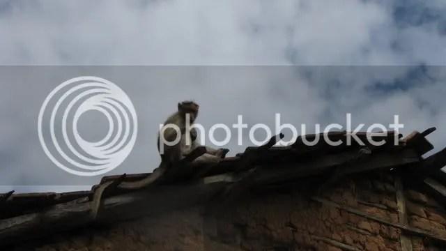 monkey 281210