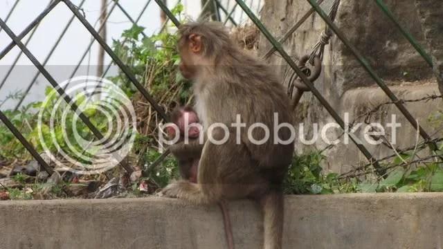 monkey baby 281210
