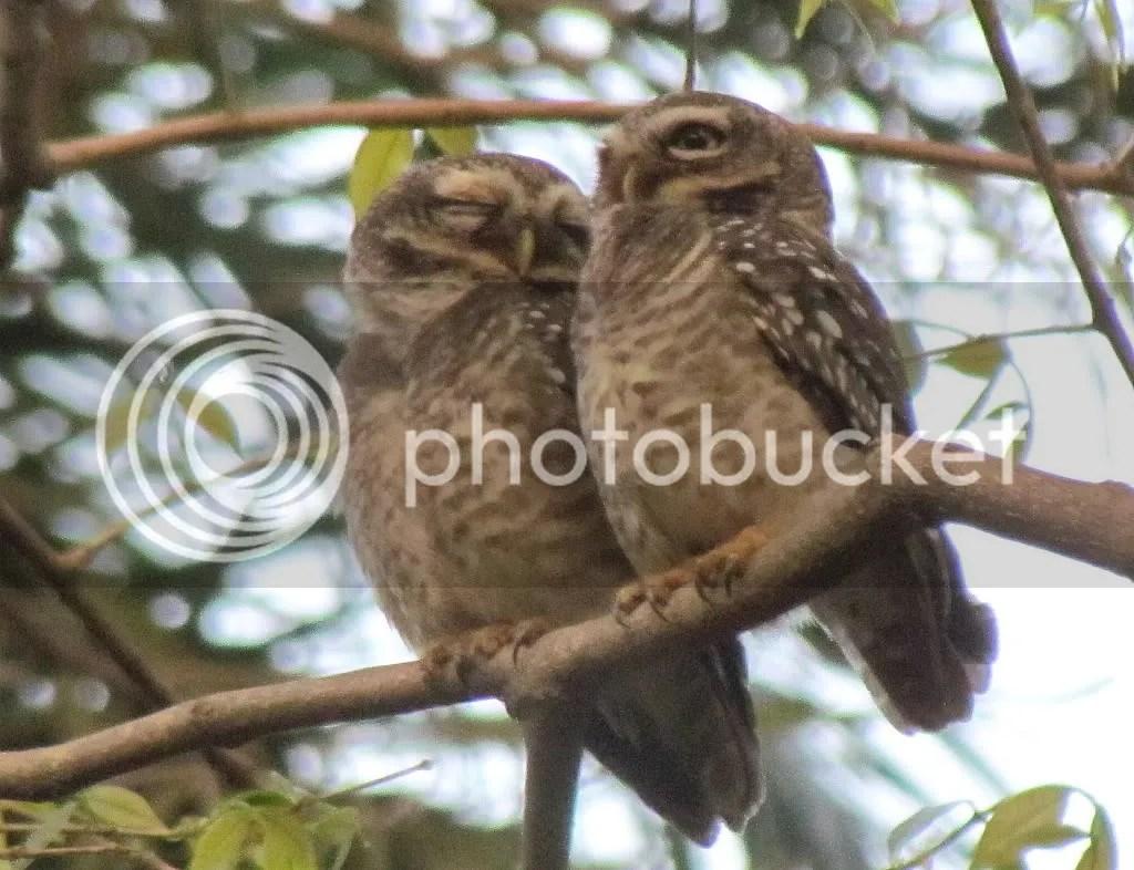 2  spt owlt lb 150312