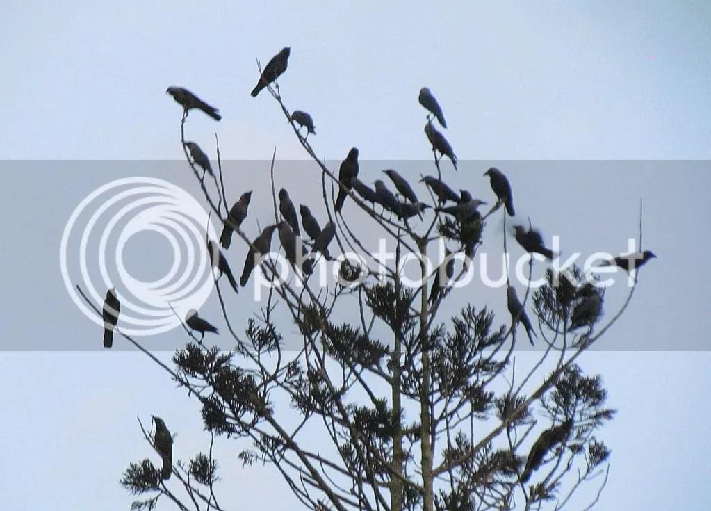 crows lb 160312