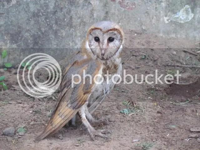 L brn owl st trkdyr 211211