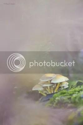 photo f2377c3d-24d0-49a0-8eb8-3c13eb770337_zps82d5c86c.jpg