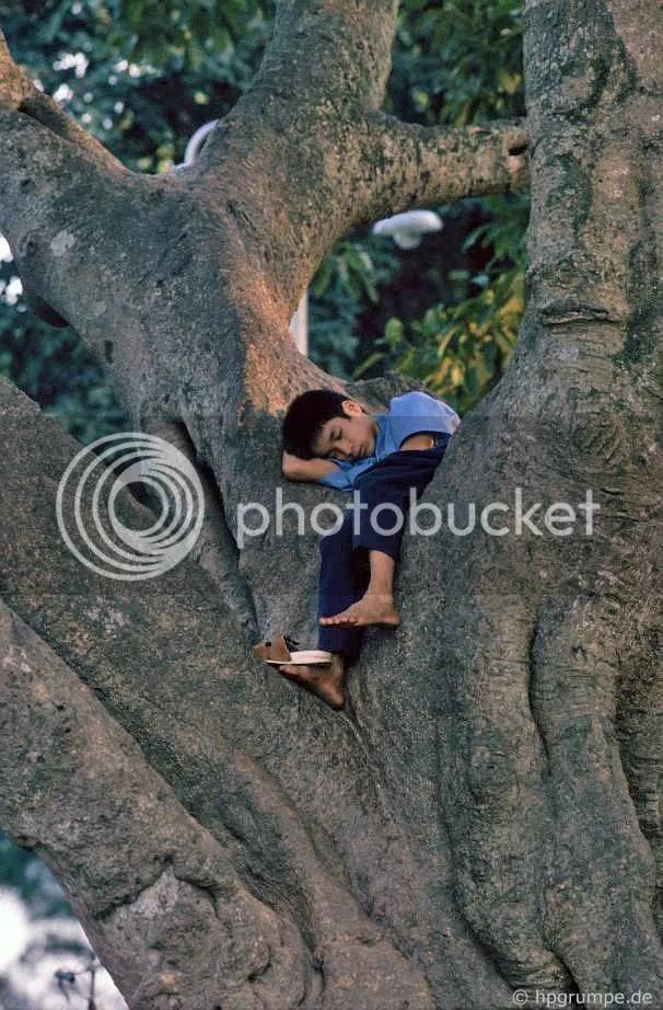 Hồ Hoàn Kiếm - Hà Nội: nap trong cây