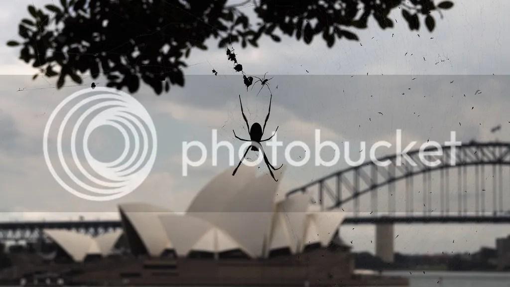 photo Golden_Orb_Spider_zpsi5j1sspv.jpg