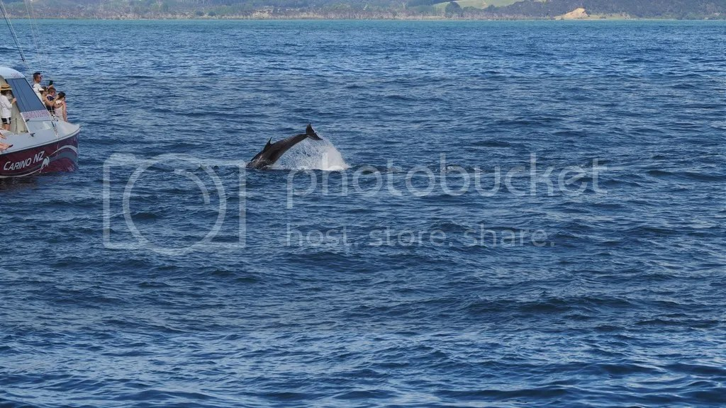photo Bottlenose_Dolphin_1_zpsccp51auv.jpg