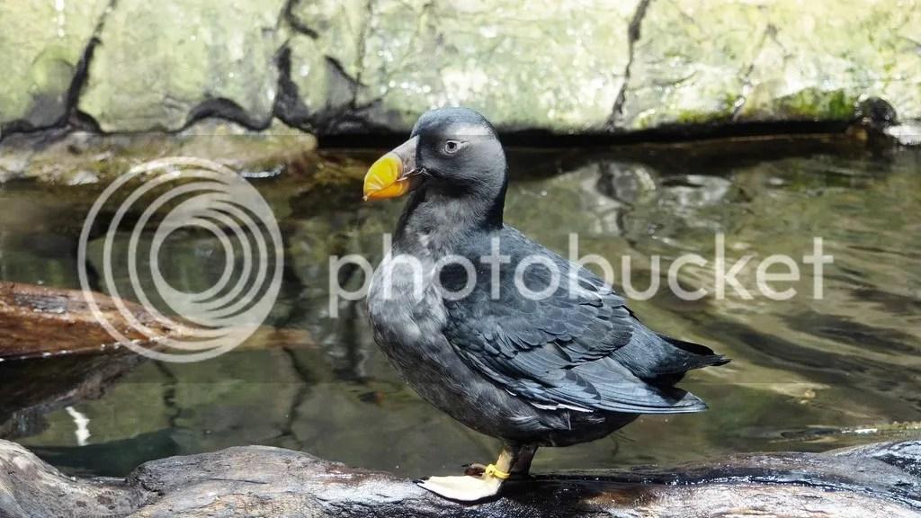 photo Monterey_Bay_Aquarium_1_zpsmkfbihfz.jpg