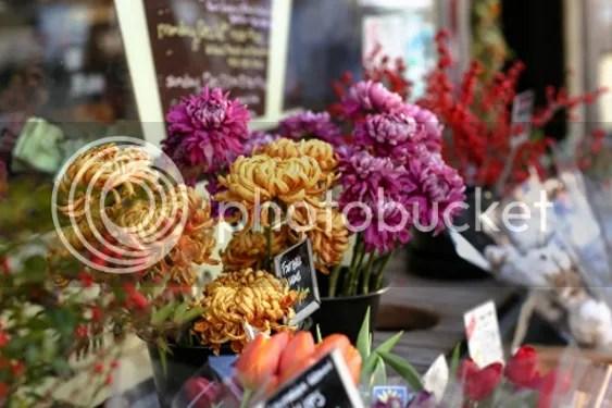blumen pflanzen online kaufen online shop deutschland große auswahl