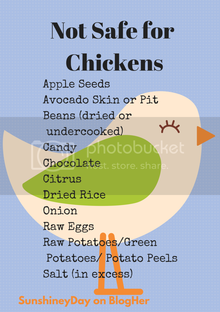 Not Safe for Chickens: a Graphic