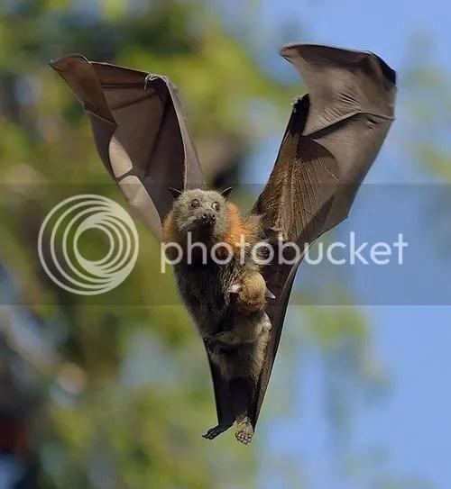 Mama Bat and Baby Bat