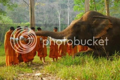 Singing Bowls for Elephant