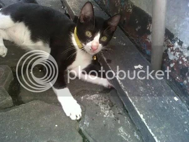 Kido kucing Nia