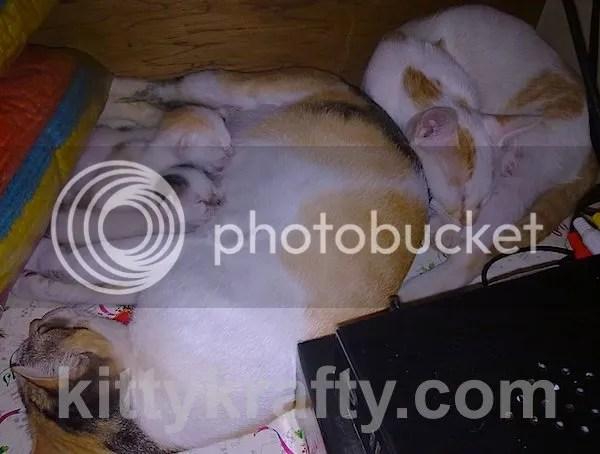 Cha Bong Gun - kucing Rani Elisabeth